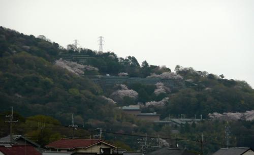 20100407-001.jpg