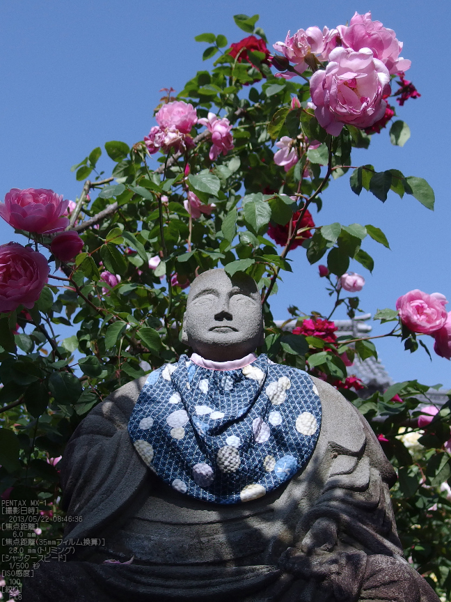 おふさ観音の薔薇_2013yaotomi_17s.jpg