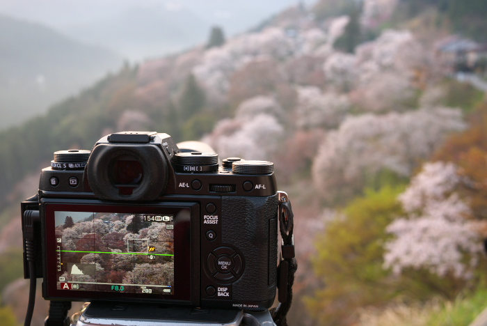 下北山村,桜,2014開花(P1040178_F5,0,20mm)_2014yaotomi_.jpg