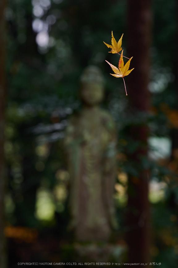 九品寺・紅葉(PB290110,120mm,F5.6,EM1)2014yaotomi_.jpg