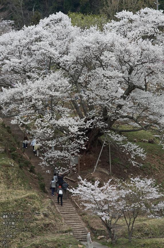 仏隆寺千年桜_K5IIs_2013yaotomi_2s.jpg