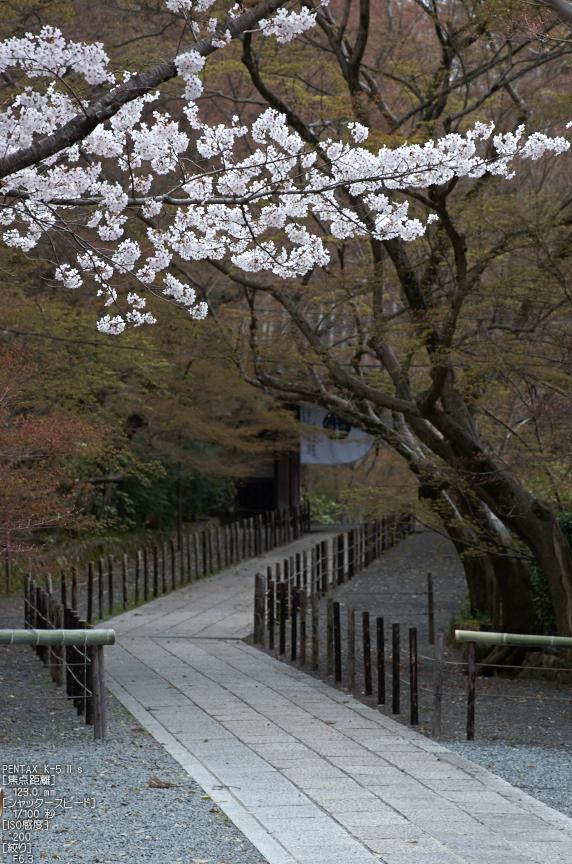 光明寺の桜_2013yaotomi_28s.jpg