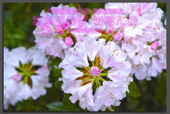 写真散歩会・お写ん歩_20130511yaotomi_1st.jpg