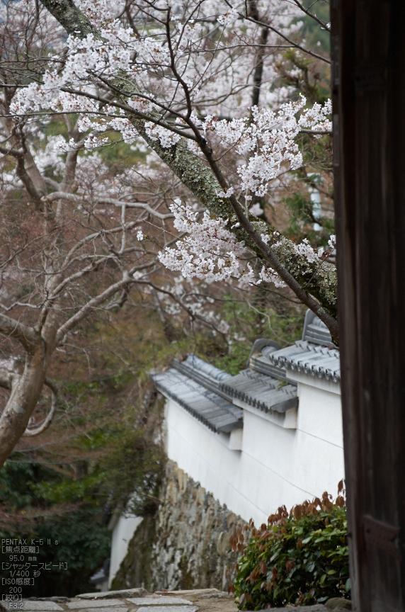 勝持寺(花の寺)の桜_2013yaotomi_21s.jpg