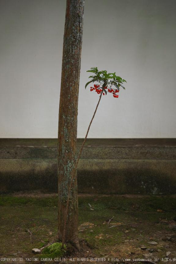 南禅寺,新緑(SDIM0123,--mm,F--)2014yaotomi_.jpg