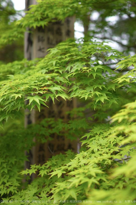 南禅寺,新緑(SDIM0154,35mm,F1.8)2014yaotomi_.jpg