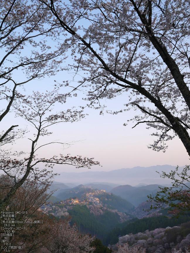 吉野山_桜_2012年_八百富_5.jpg