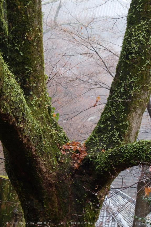 大和七福八宝めぐり,長谷寺_DSCF0241(Cap,25.6mm,F4.9,iso100,XQ1)2014yaotomi.jpg