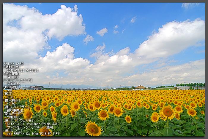 大垣ひまわり_2012_yaotomi_お写ん歩_1.jpg