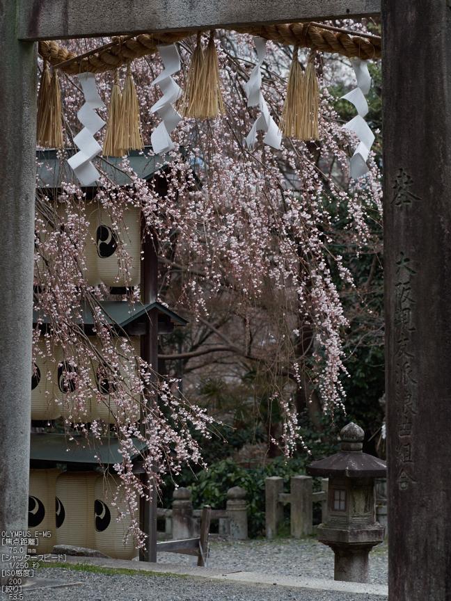 大石神社_しだれ桜_2013yaotomi_5s.jpg