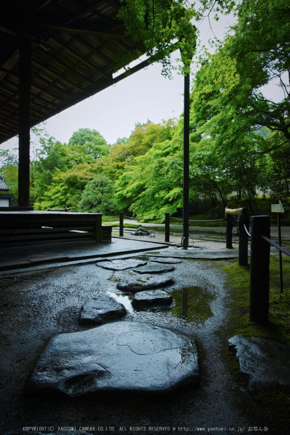 天授庵,夏の庭園(DP0Q0243,5.6,1-100 秒)2015yaotomi_.jpg