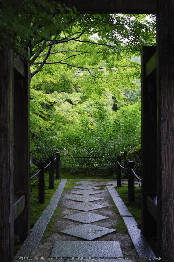 天授庵,夏の庭園(DP2Q0168,4.5,1-30 秒)2015yaotomi_.jpg
