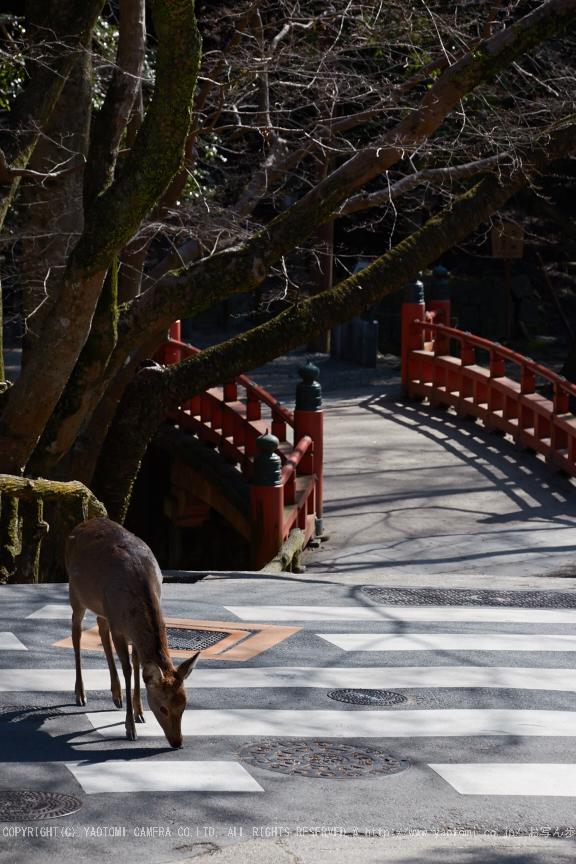奈良,梅,SIGMA18_200,(IMG_9925,106mm,F9)2014yaotomi_.jpg