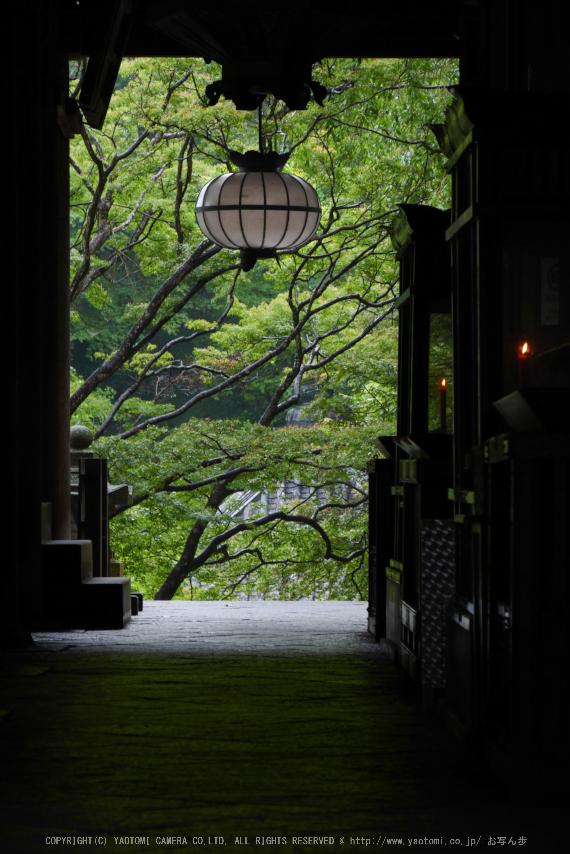 奈良,長谷寺,紫陽花(P1010260,92 mm,F9)2015yaotomi_.jpg