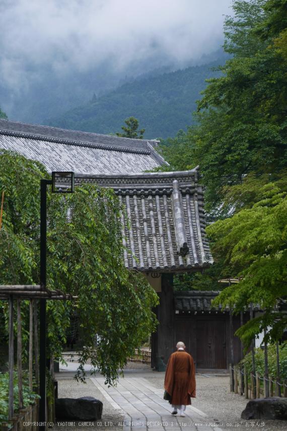 奈良,長谷寺,紫陽花(P1010343,81 mm,F5.6)2015yaotomi_.jpg