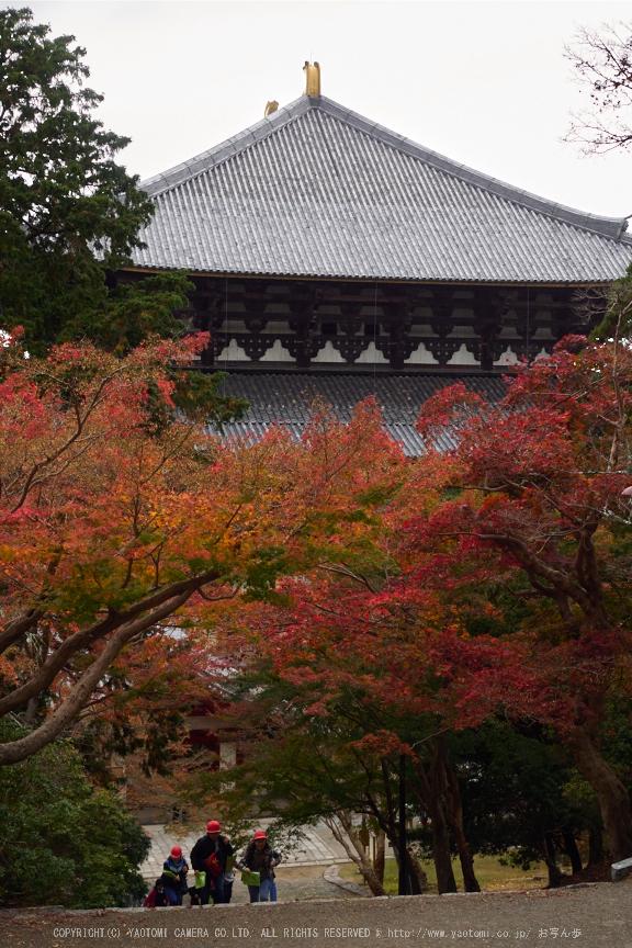 奈良公園,東大寺,紅葉(PB250287,30 mm,F6.3,iso200)2015yaotomi.jpg
