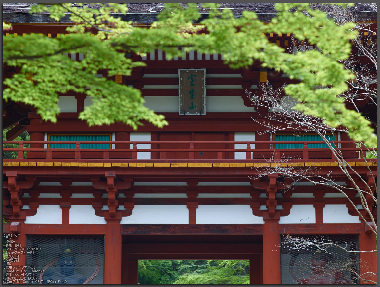 http://www.yaotomi.co.jp/blog/walk/%E5%AE%A4%E7%94%9F%E5%AF%BA%E3%81%AE%E7%9F%B3%E6%A5%A0%E8%8A%B1_2013yaotomi_1st.jpg