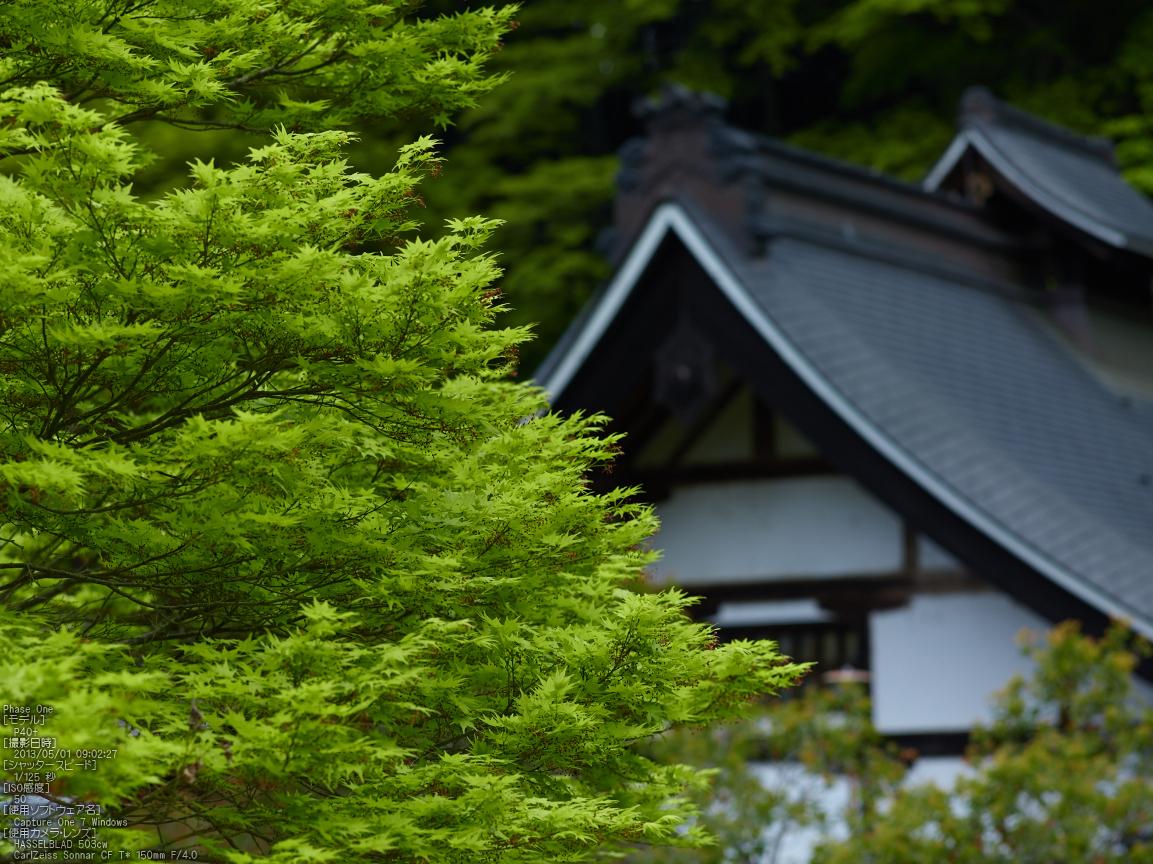 http://www.yaotomi.co.jp/blog/walk/%E5%AE%A4%E7%94%9F%E5%AF%BA%E3%81%AE%E7%9F%B3%E6%A5%A0%E8%8A%B1_2013yaotomi_3s.jpg