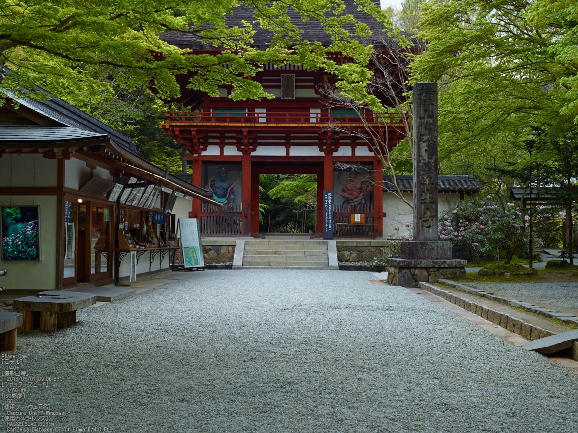 http://www.yaotomi.co.jp/blog/walk/%E5%AE%A4%E7%94%9F%E5%AF%BA%E3%81%AE%E7%9F%B3%E6%A5%A0%E8%8A%B1_2013yaotomi_5s.jpg
