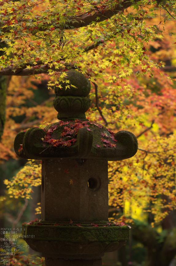 室生寺紅葉(2)_2012yaotomi_16.jpg