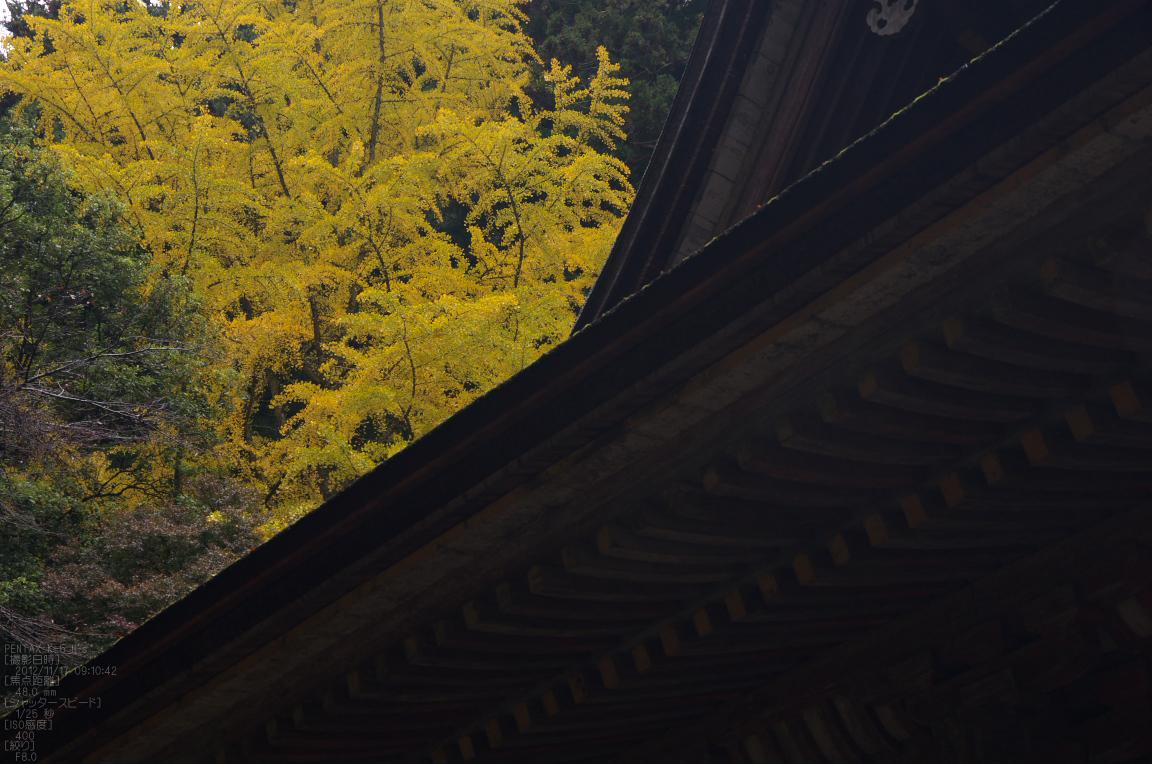 http://www.yaotomi.co.jp/blog/walk/%E5%AE%A4%E7%94%9F%E5%AF%BA_%E7%B4%85%E8%91%892012_yaotomi_15s.jpg