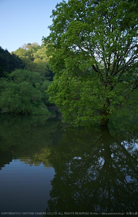 室生湖,新緑(P1040217,F1.7)2014yaotomi_2.jpg