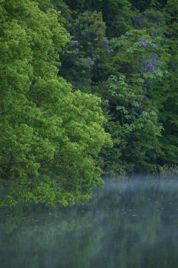 室生湖,新緑(P1120452,85mm,F2,8)2014yaotomi_.jpg