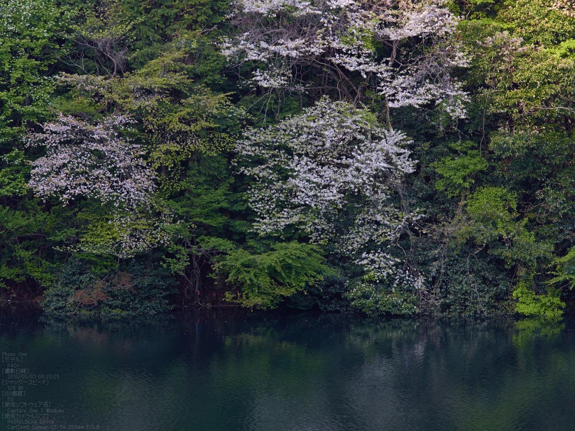 http://www.yaotomi.co.jp/blog/walk/%E5%AE%A4%E7%94%9F%E6%B9%96%E3%81%AE%E6%96%B0%E7%B7%91_2013yaotomi_7s.jpg