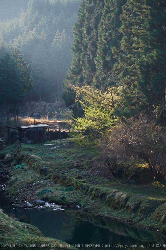 室生湖・新緑,桜(DSCF5198,F7.1,74.1)2014yaotomi_.jpg