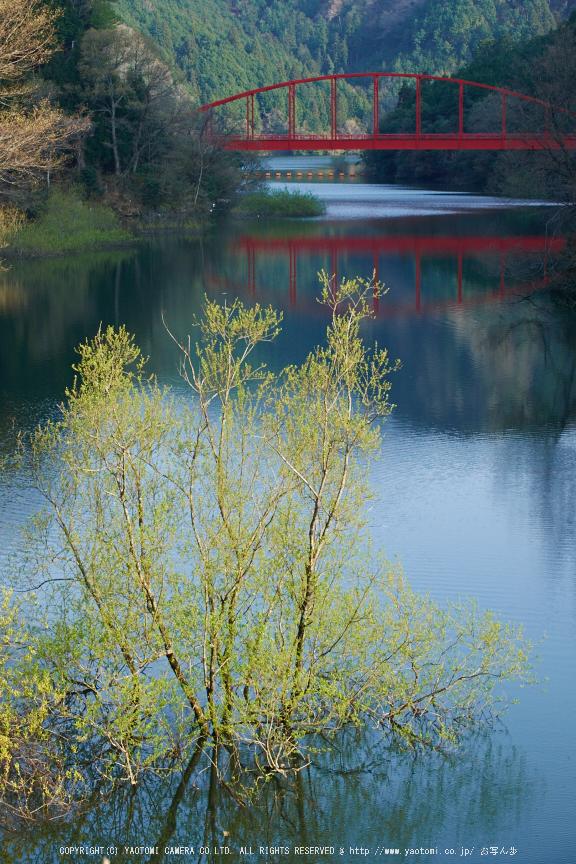 室生湖・新緑,桜(DSCF5216,F8,55mm)2014yaotomi_.jpg