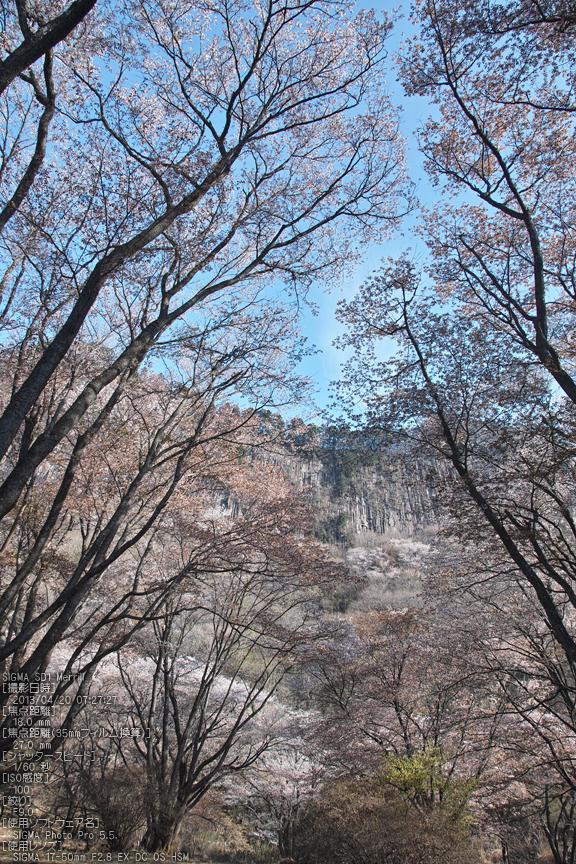 屏風岩公園の桜(SD1m)_2013yaotomi_23s.jpg