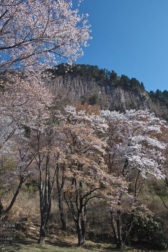 屏風岩公園の桜(SD1m)_2013yaotomi_26s.jpg