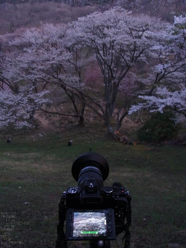 屏風岩公苑_桜_CX6_yaotomi_20.jpg