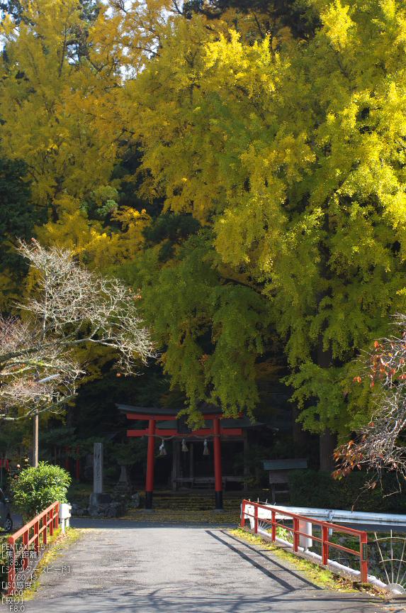 岩戸落葉神社_紅葉2012_yaotomi_2s.jpg