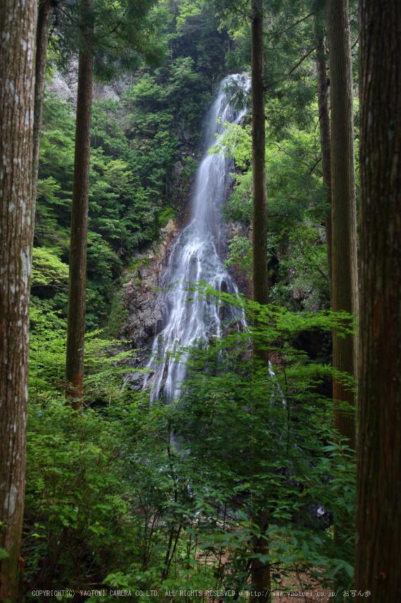 御船の滝,夏(5DS_7047,27 mm,F4)2015yaotomi_.jpg