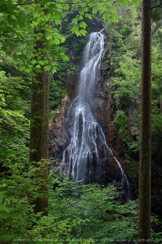 御船の滝,夏(5DS_7057,27 mm,F8)2015yaotomi_ 1.jpg