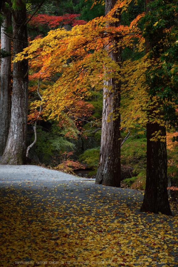 投石の滝,紅葉(DSC_1344,55mm,F5.6,D750)2014yaotomi.jpg