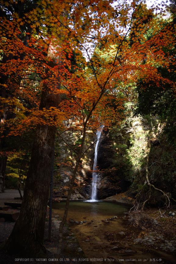 投石の滝,紅葉(DSC_1353,24mm,F4,D750)2014yaotomi.jpg