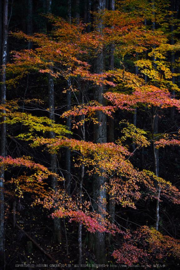 投石の滝,紅葉(DSC_1377,52mm,F4.5,D750)2014yaotomi.jpg