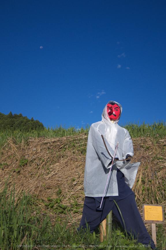 明日香,稲渕,案山子ロード(IMGP0062(RAW),8.5mm,F1.9,QS1)2014yaotomi_.jpg