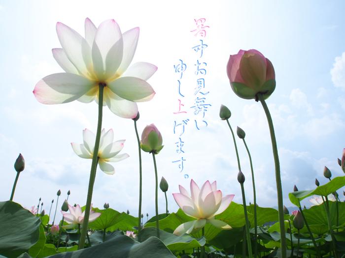 暑中見舞い_2012_1.jpg