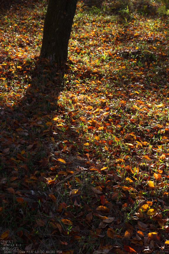 曽爾,屏風岩公苑,紅葉(PENTAX-K3)_2013yaotomi_33s.jpg