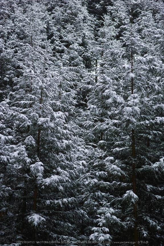 曽爾,屏風岩公苑,雪景(DP3Q0160,f-3.5,dp3Q)2015yaotomi_.jpg