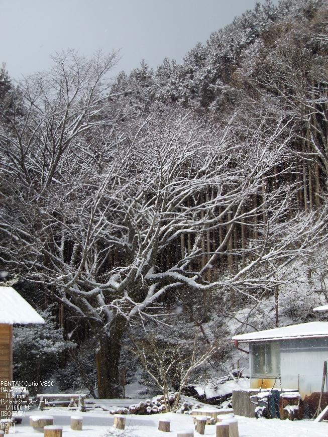 月うさぎ_2012冬_top1.jpg
