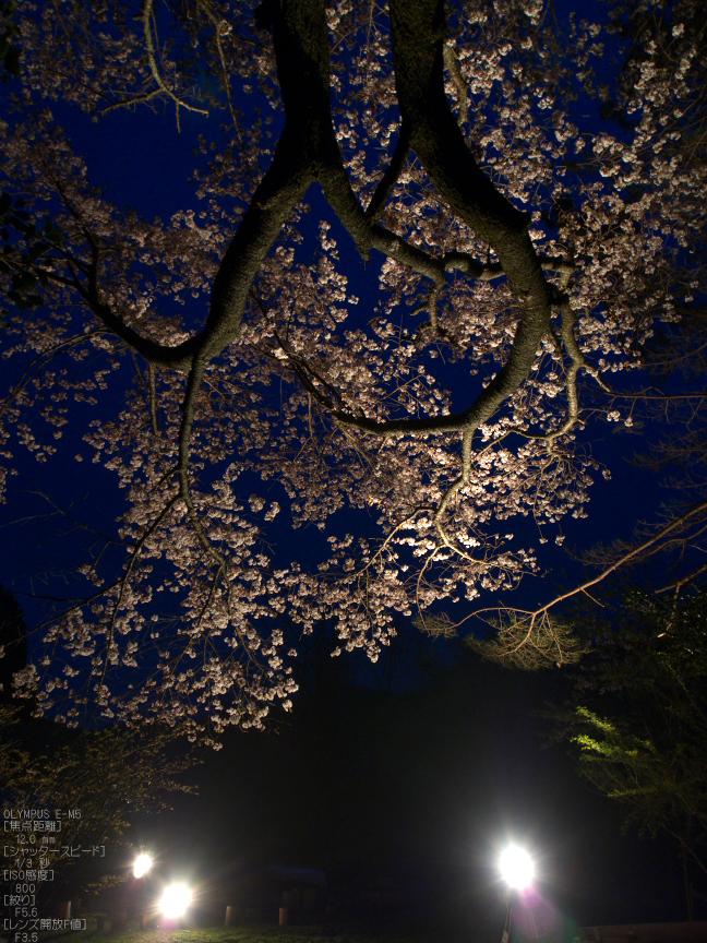 月桜_2012_OLYMPUS_E-M5_10.jpg