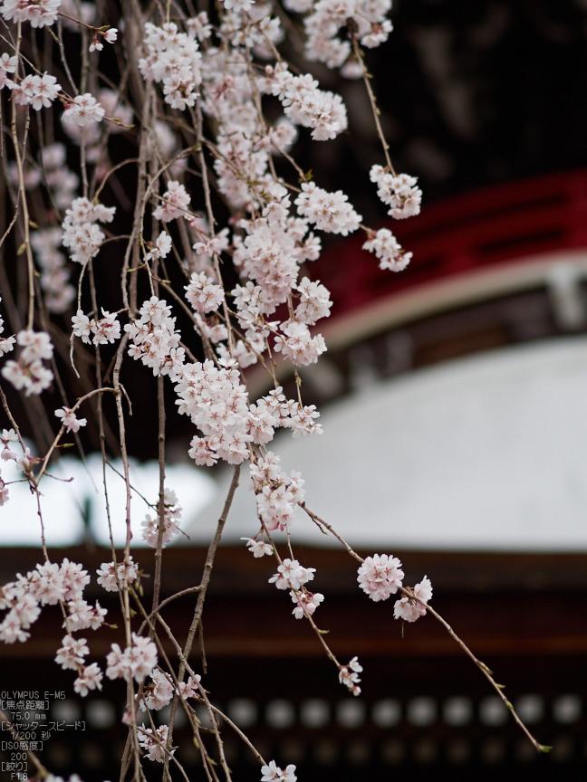 東南院(吉野山)_桜_2013yaotomi_11s.jpg