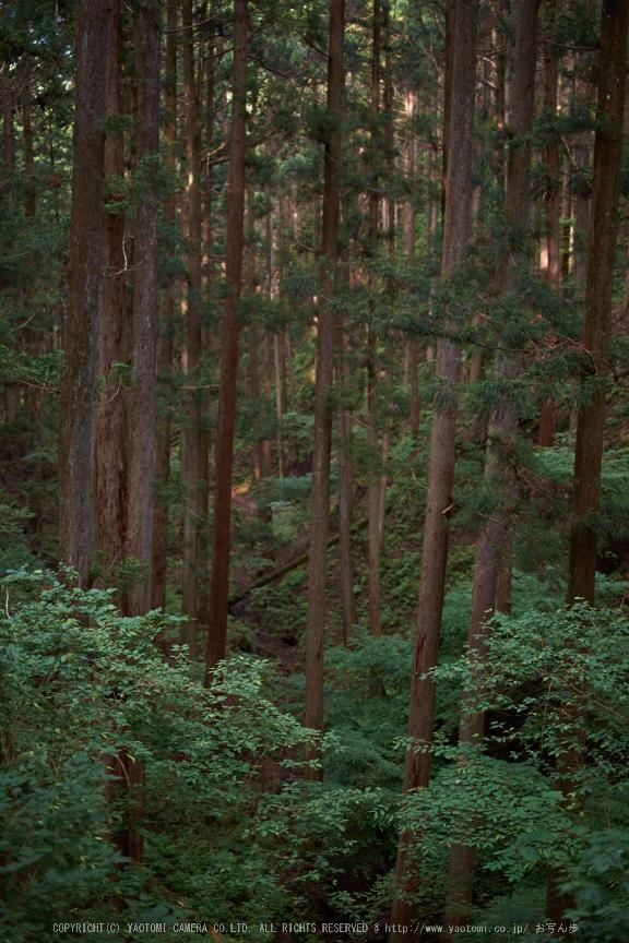 東吉野,6月(DSCF6233,35mm,F1.4)2014yaotomi_.jpg