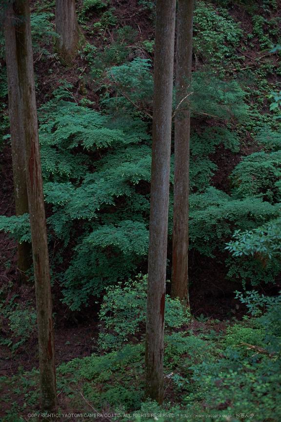 東吉野・6月(DSCF6258,35mm,F2)2014yaotomi_.jpg