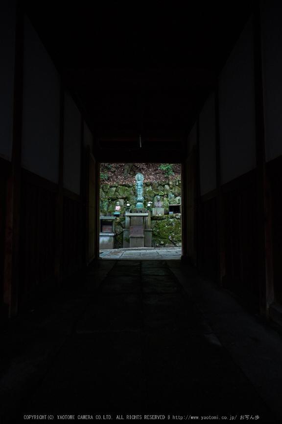 柳谷観音,あじさい(DSCF6675,F3.2,XT1)2014yaotomi_.jpg