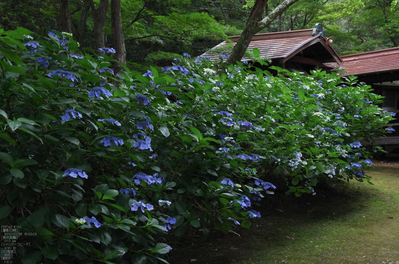 http://www.yaotomi.co.jp/blog/walk/%E6%9F%B3%E8%B0%B7%E8%A6%B3%E9%9F%B3%E3%81%AE%E7%B4%AB%E9%99%BD%E8%8A%B1_2013yaotomi_11s.jpg
